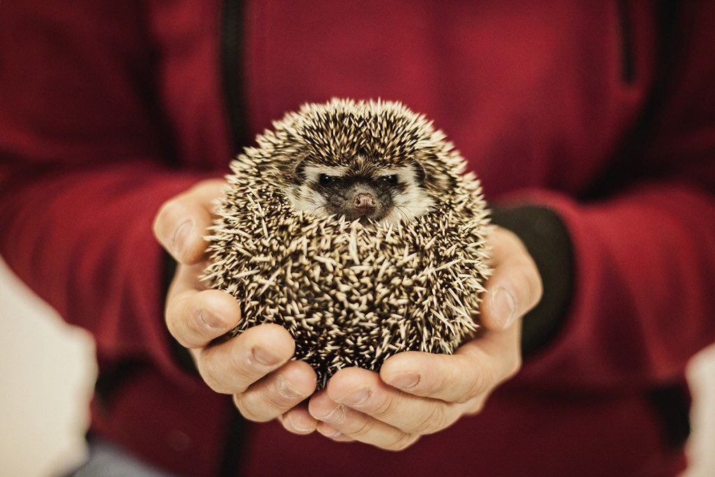 WEB-valerie-bts-hedgehog-photo-1